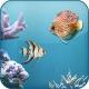 무료 물고기 라이브배경화면